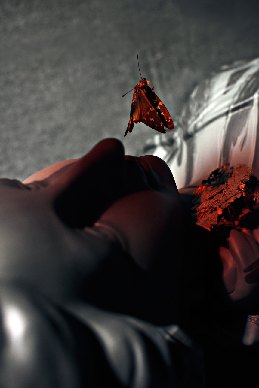 falling-butterfly-by-ransom-ashley-(1).jpg