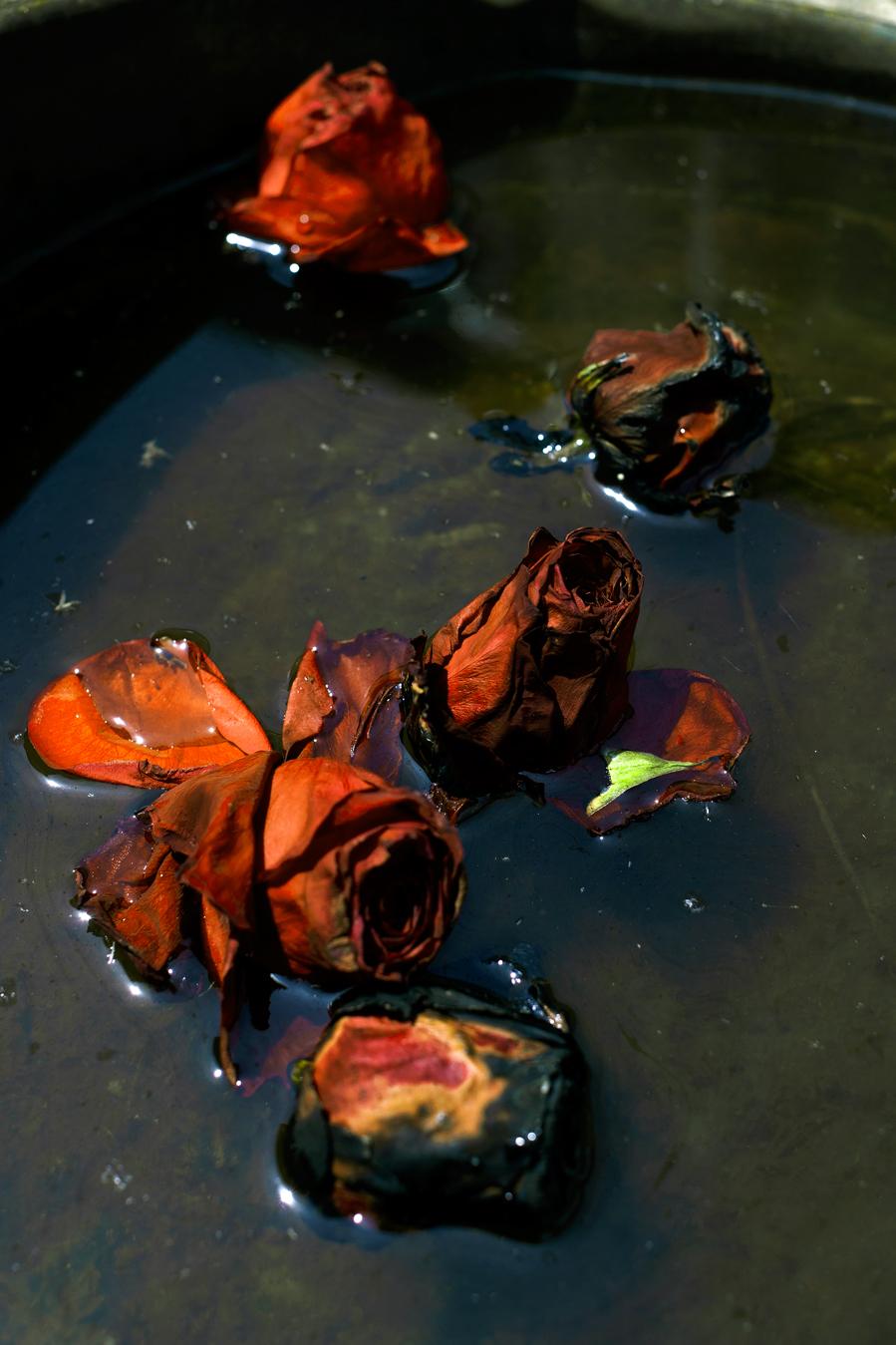 rosewater-by-ransom-ashley-.jpg