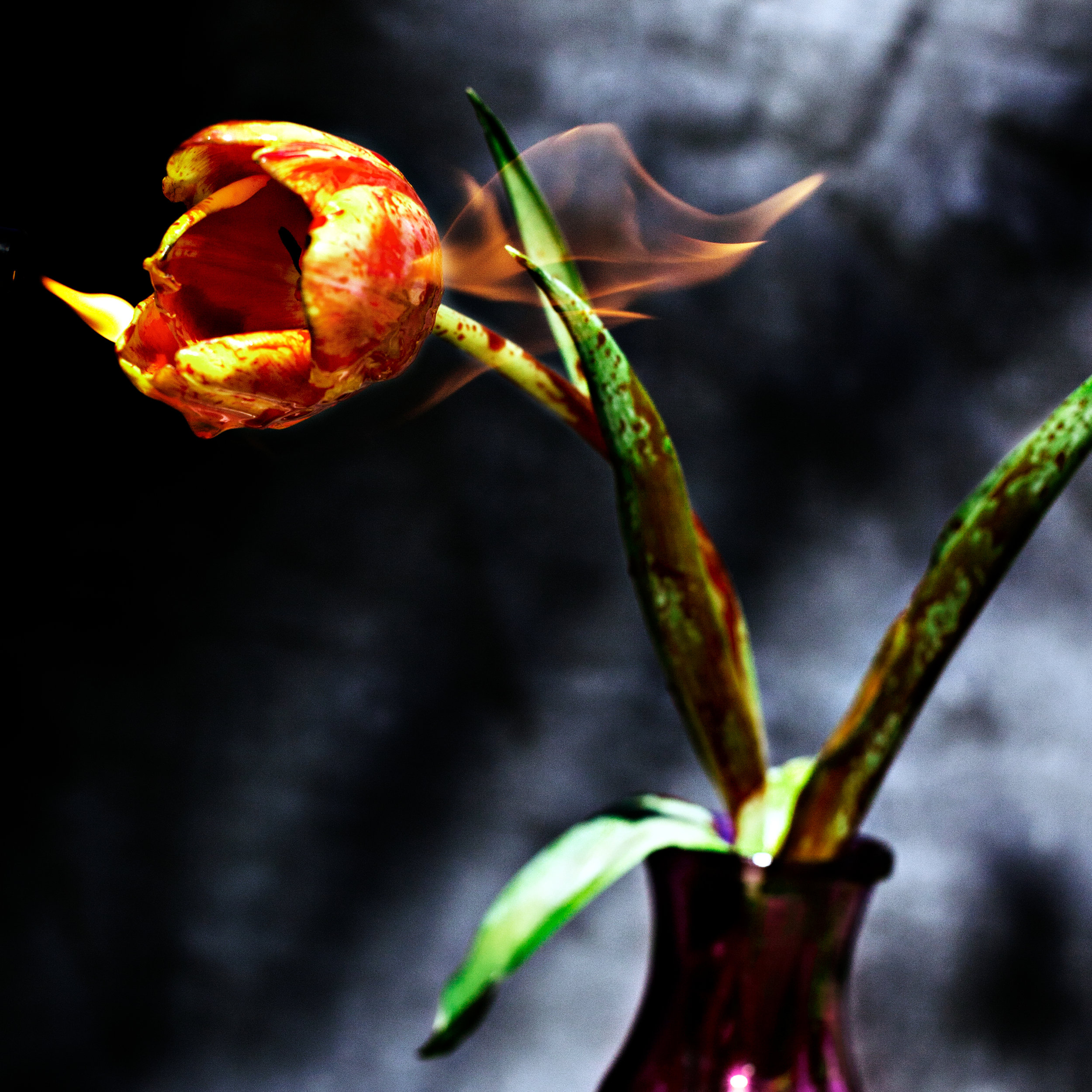 flower-fire-ransom-ashley-.jpg