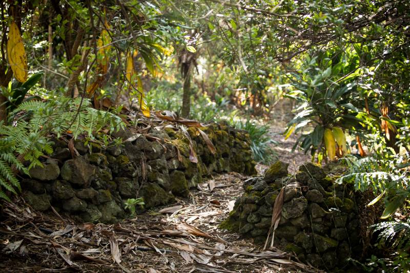Amy B.H. Greenwell Ethnobotanical Garden ( MLS 613942 ) has intact remnants of the Kona Field System.