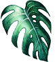Monstera Leaf small.png