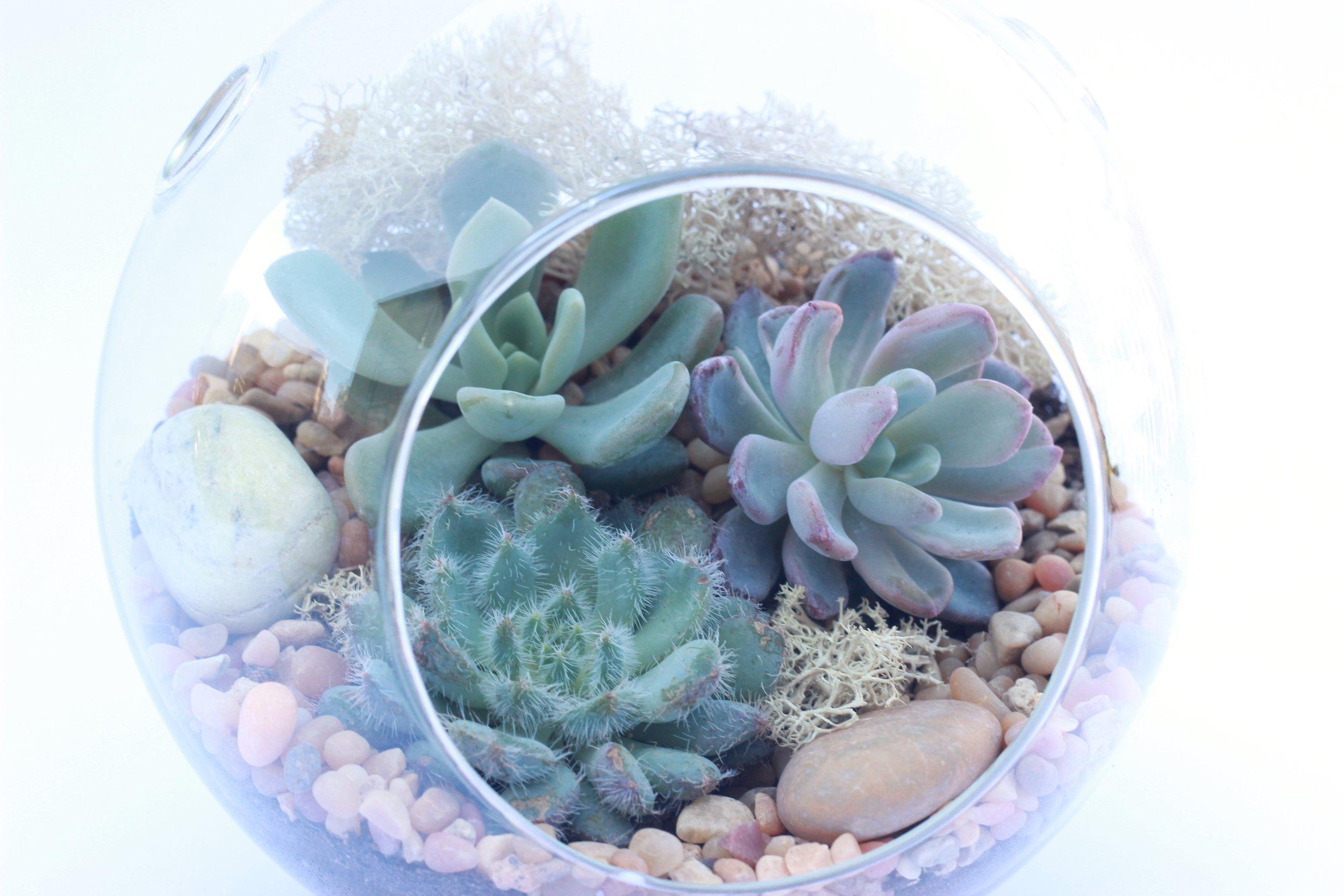 Succulent Orb Terrarium.jpg
