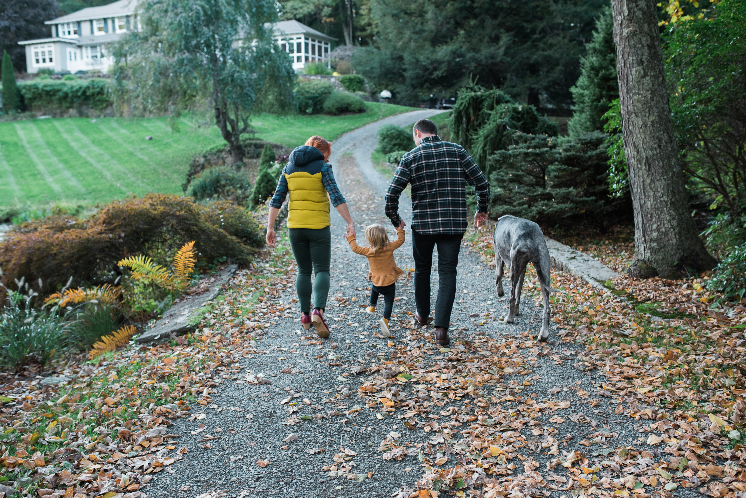 family photo holding hands walking mom dad daughter rescue Great Dane Washington CT by Lindsey Victoria Photography
