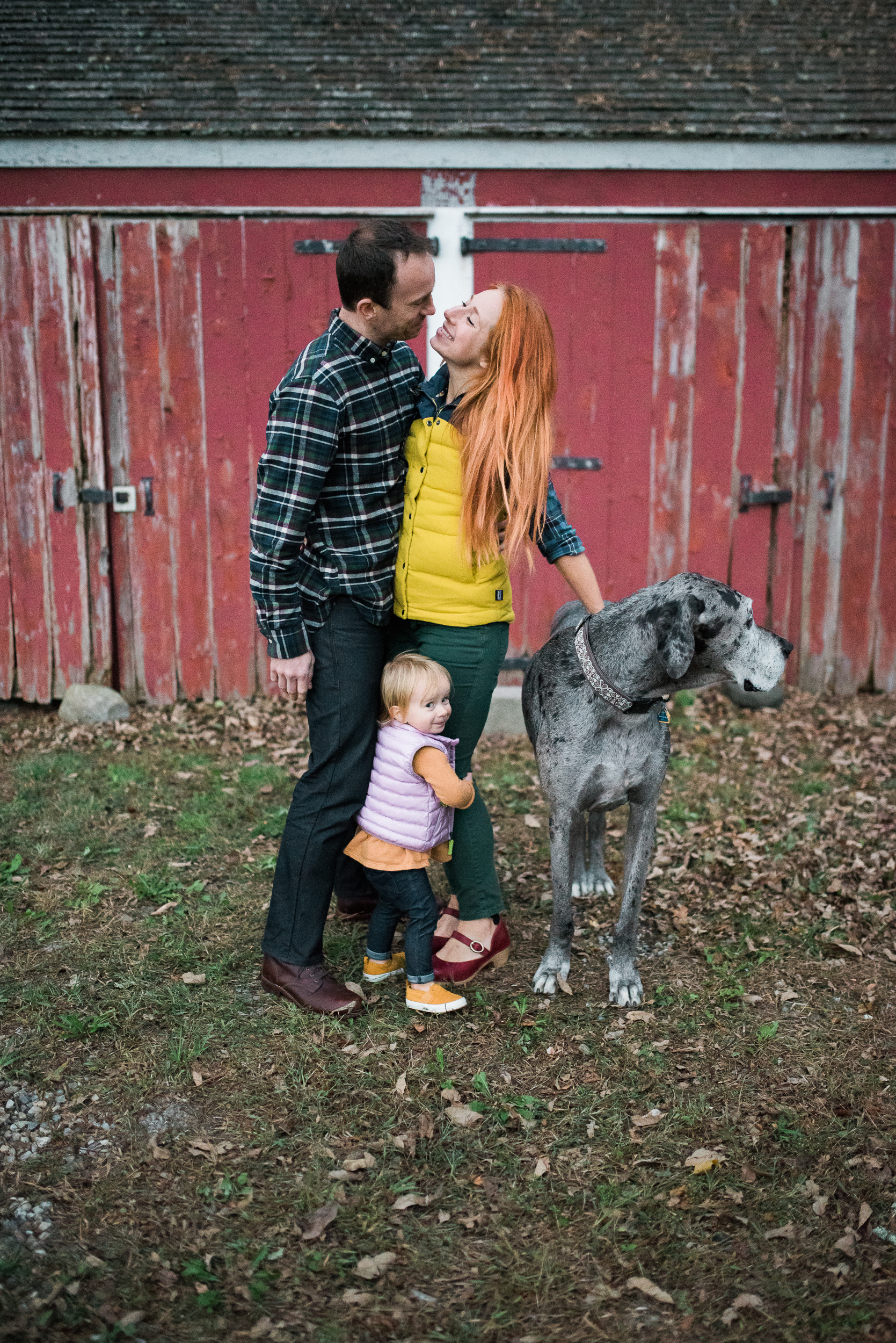 family snuggling mom dad daughter rescue Great Dane in front of red New England barn Washington CT by Lindsey Victoria Photography