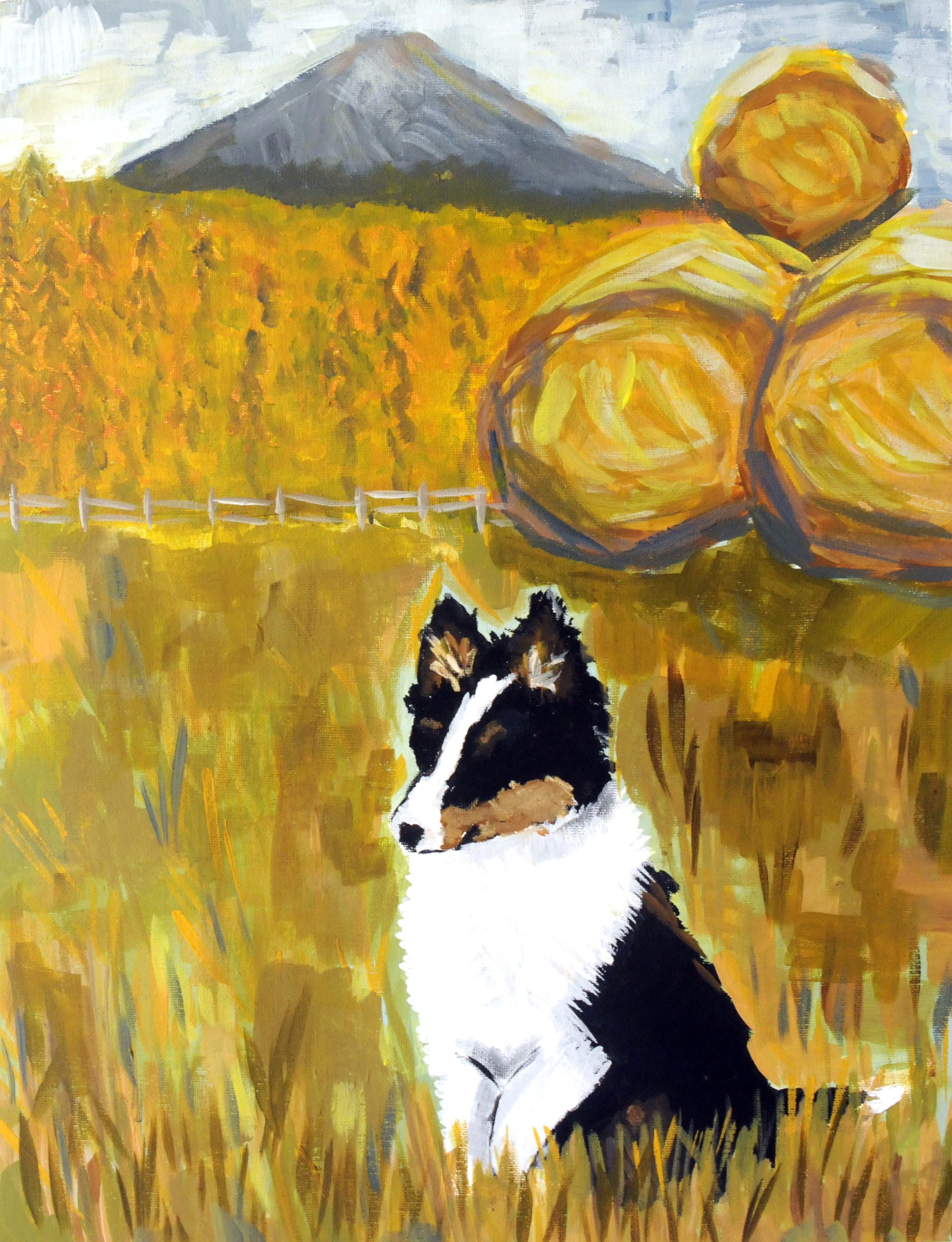 My Lil' Sheltie-SOLD