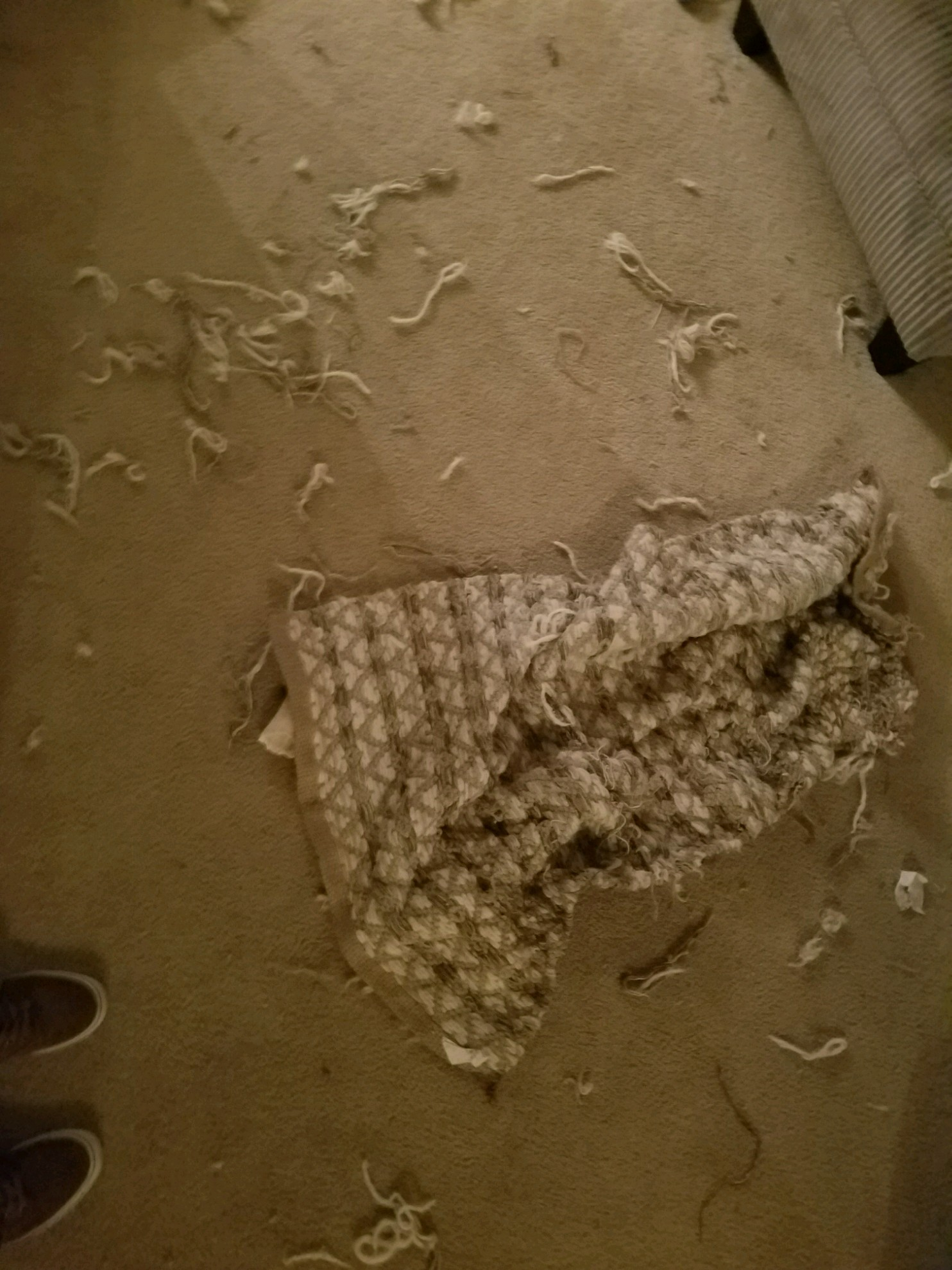 The day she destroyed my favorite rug.