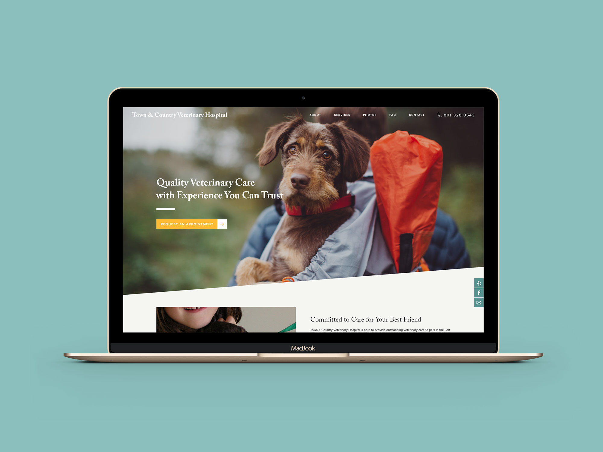 Town-and-Country-Veterinary-Hospital-website-1.jpg