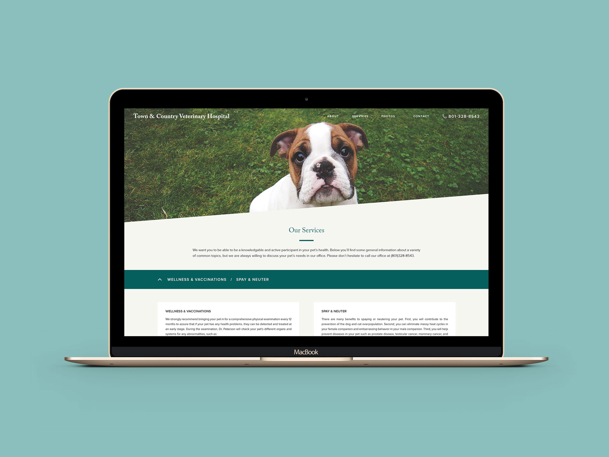 Town-and-Country-Veterinary-Hospital-website-3.jpg