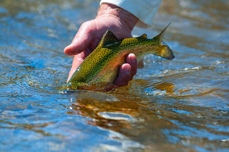 Trout Fishing Guides