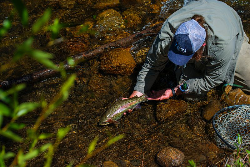 Trout Fishing Guides Fly Fishing