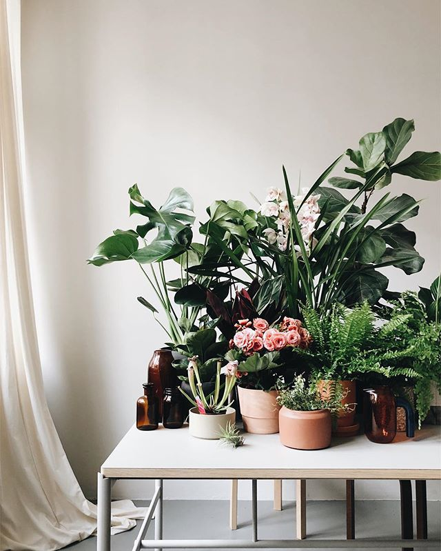 Plant table 💚