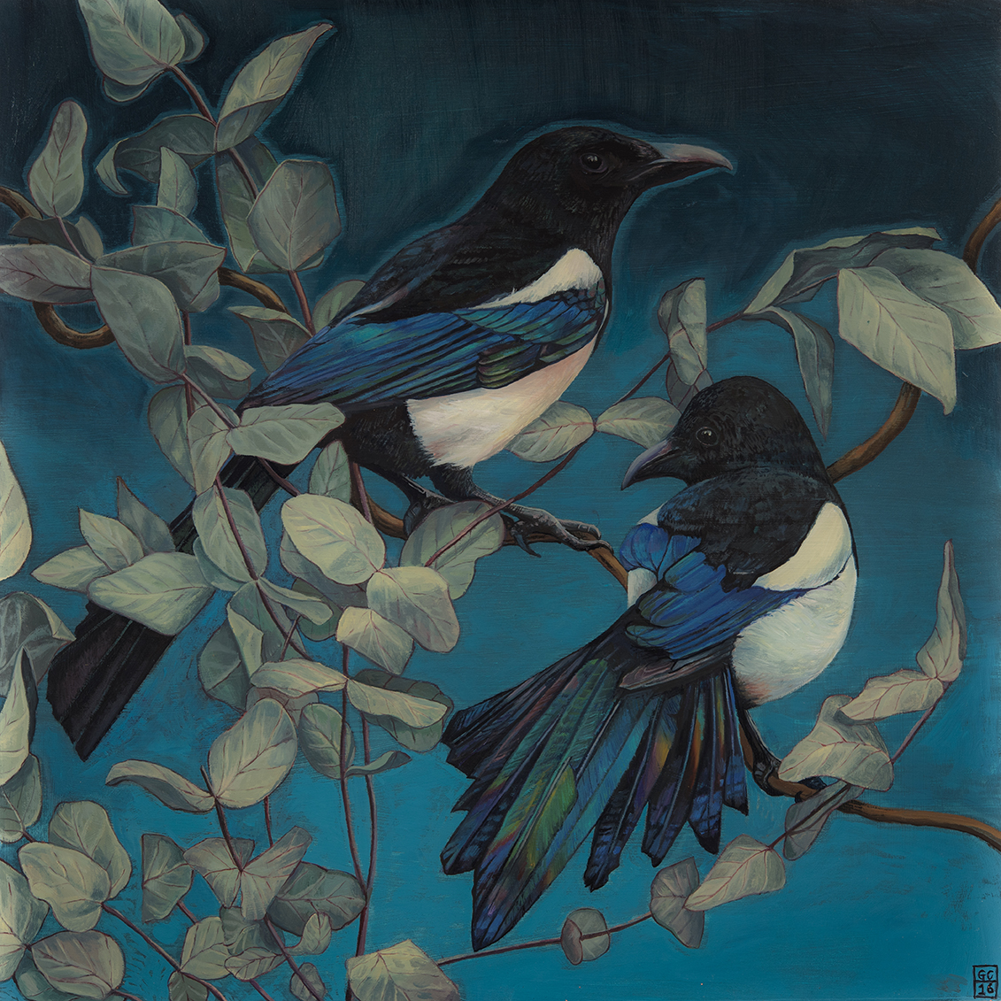 Magpies and Eucalyptus, Oil on board, 30cm x30cm 2016 SOLD