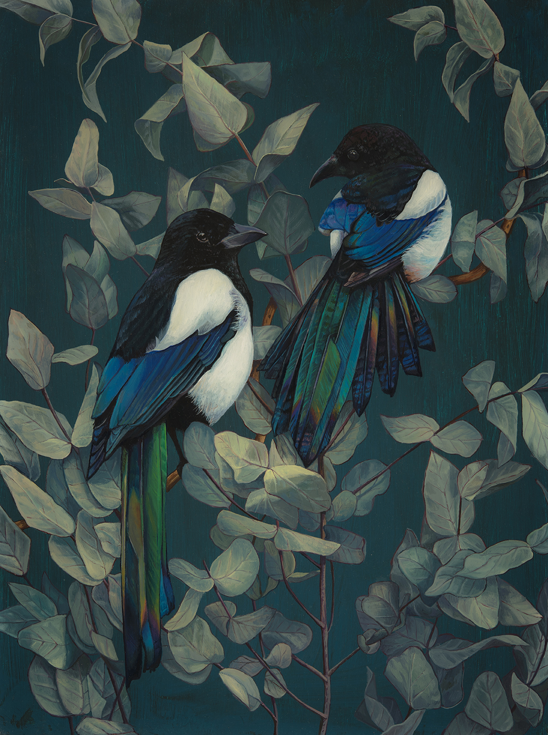 Magpies and Eucalyptus 2 , Oil on Panel, 40cm x 30cm, 2016.SOLD