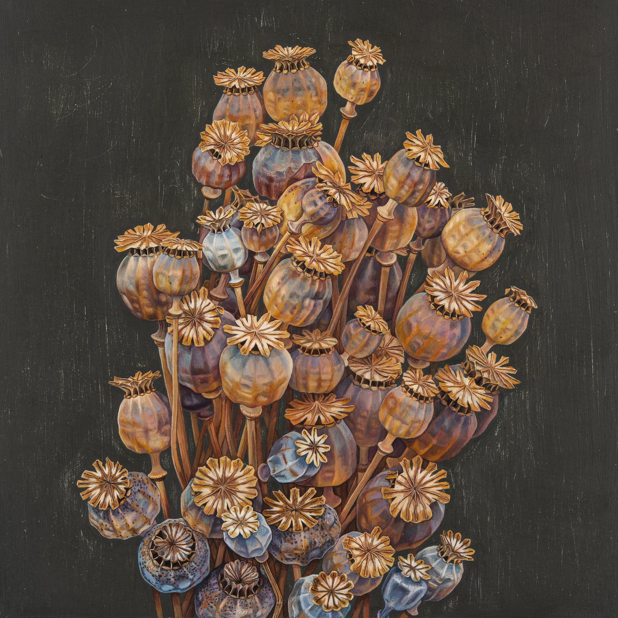 'Poppy Pods', Oil on Panel, 30 x30cm