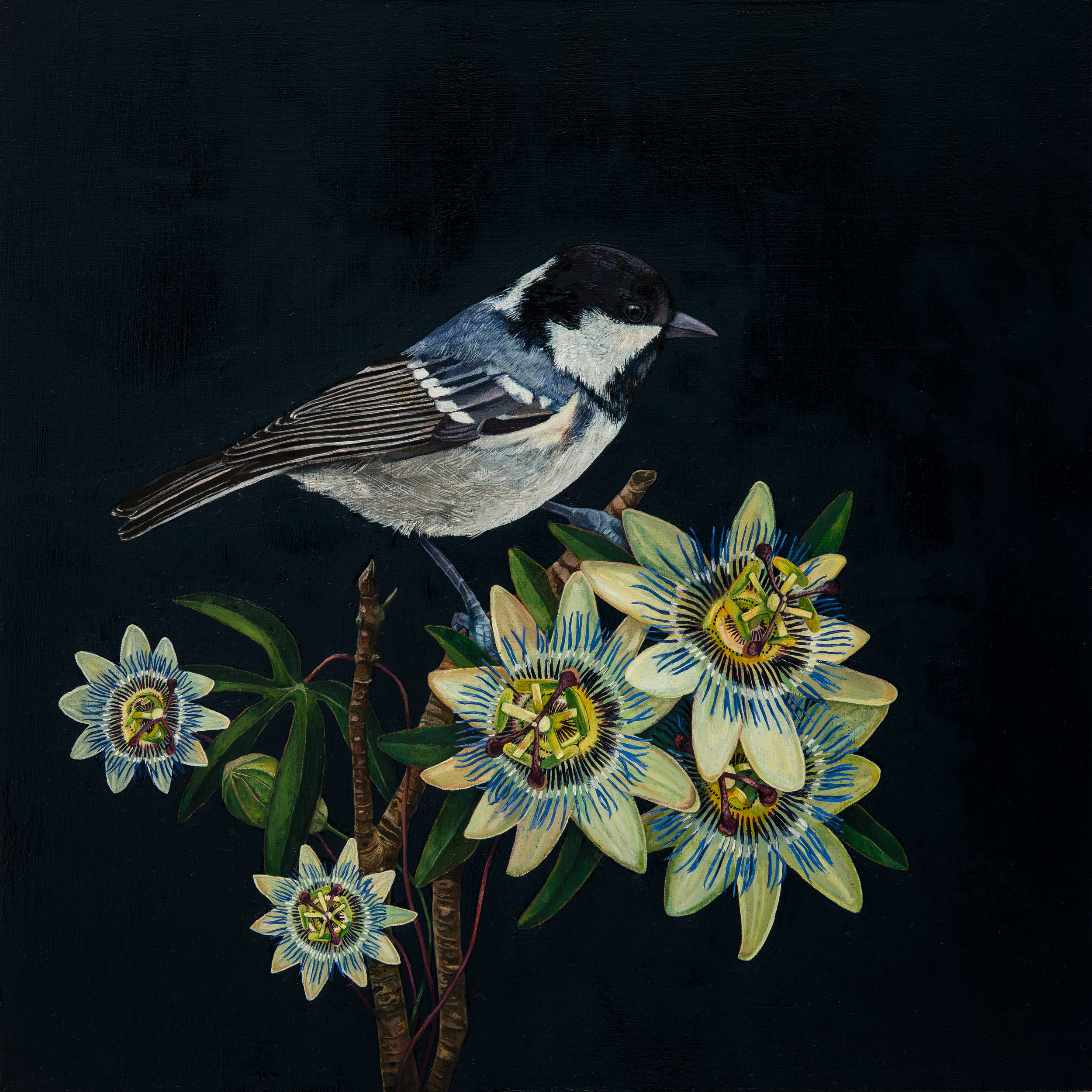 'Coal Tit and Passion Flowers, Oil on Panel, 30 x 30cm, SOLD