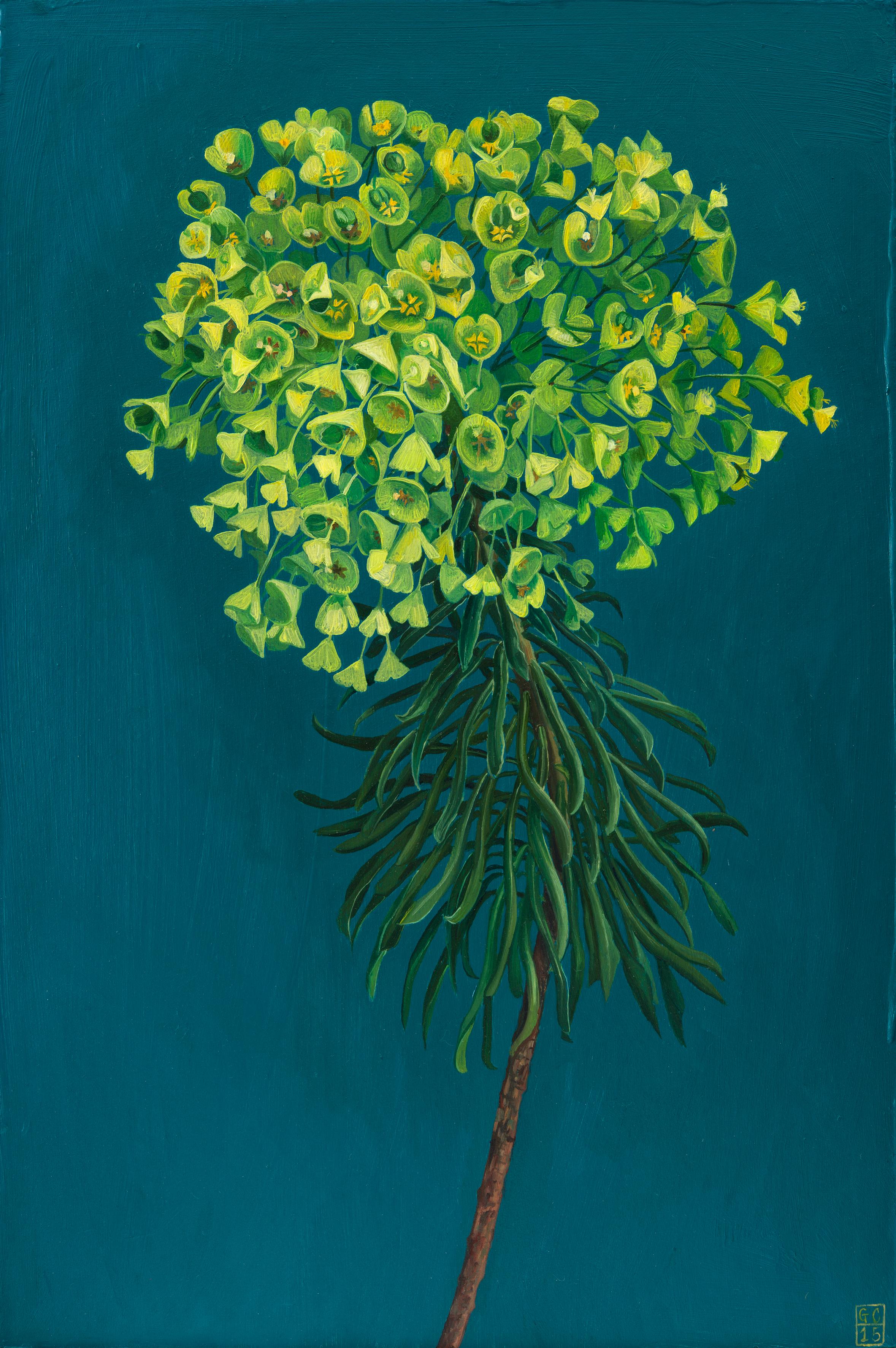 'Euphorbia', 37.5cm x25cm, Oil on Card, SOLD