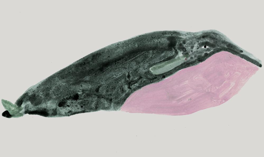 Ordenvararni_Detail_Whale_KlaraPersson.jpg