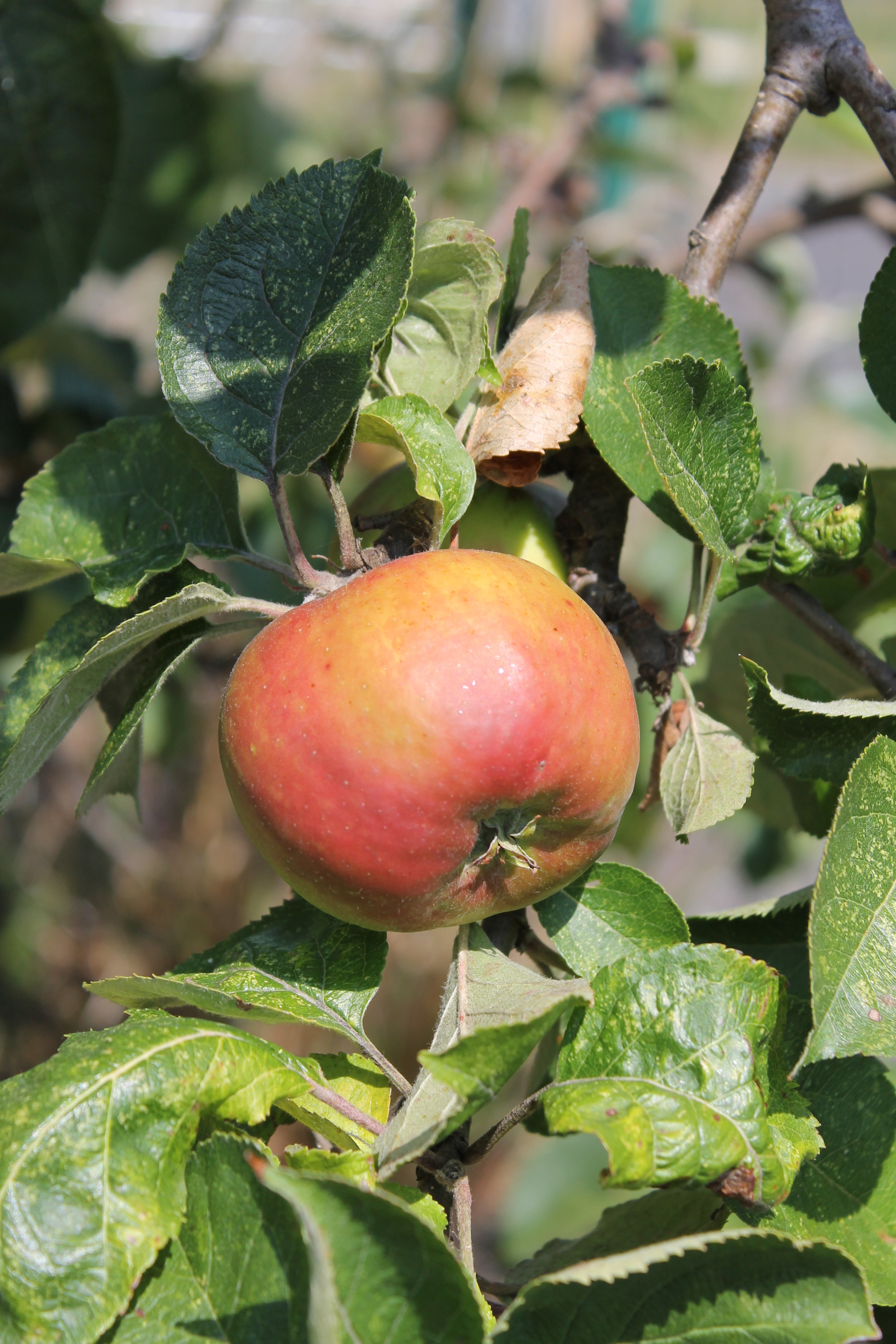 Orchards and Commiunity Projects page