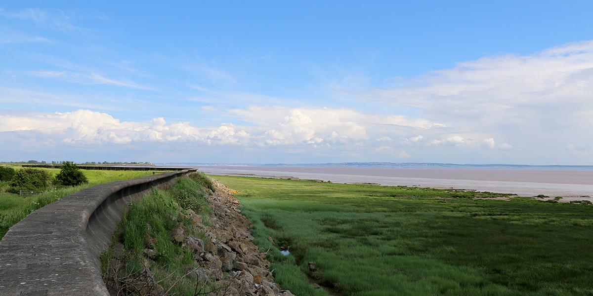 Salt marsh, Newport Wetlands (Chris Harris)