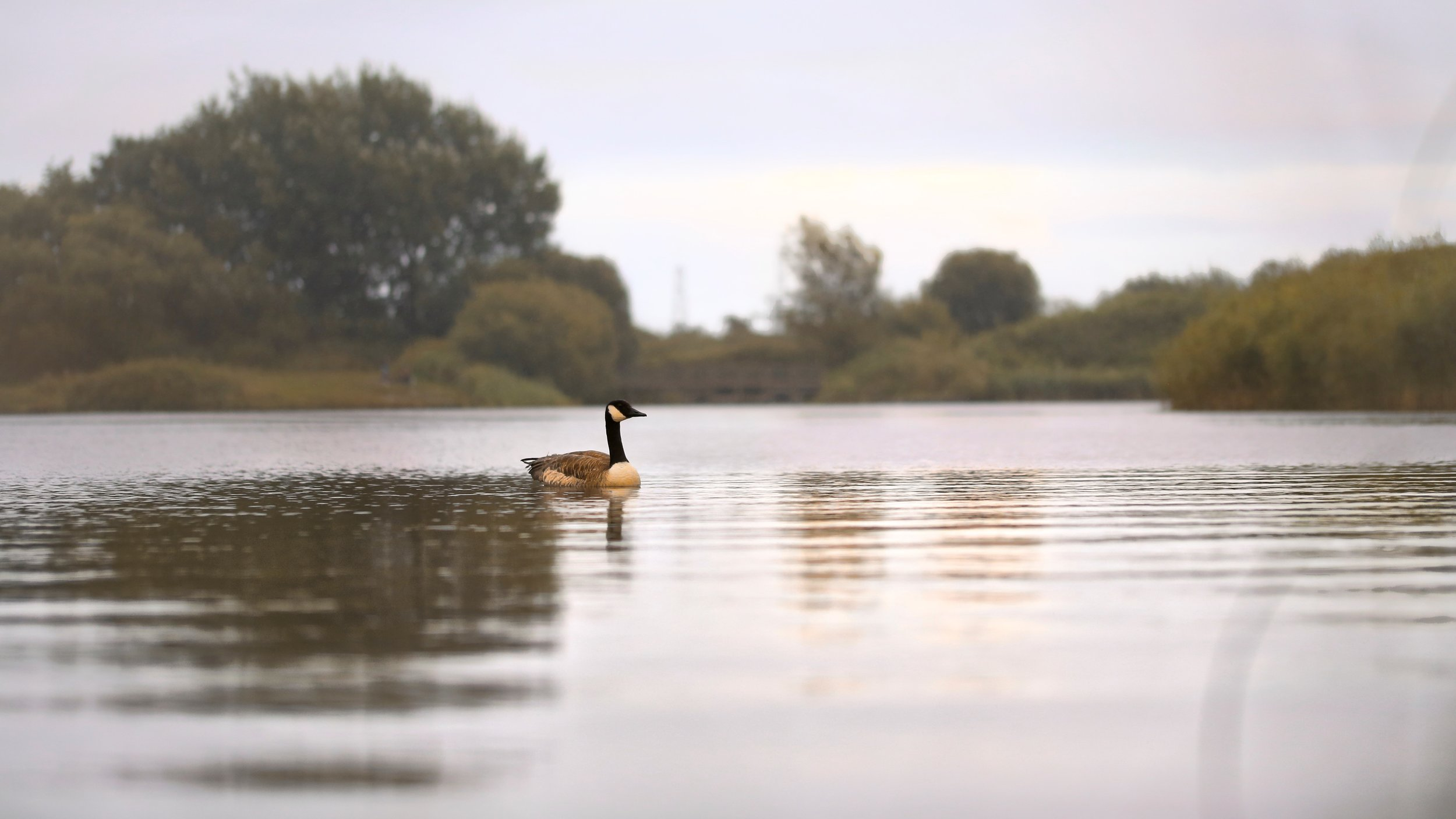 Hendre Lake Nigel Pugh.jpg