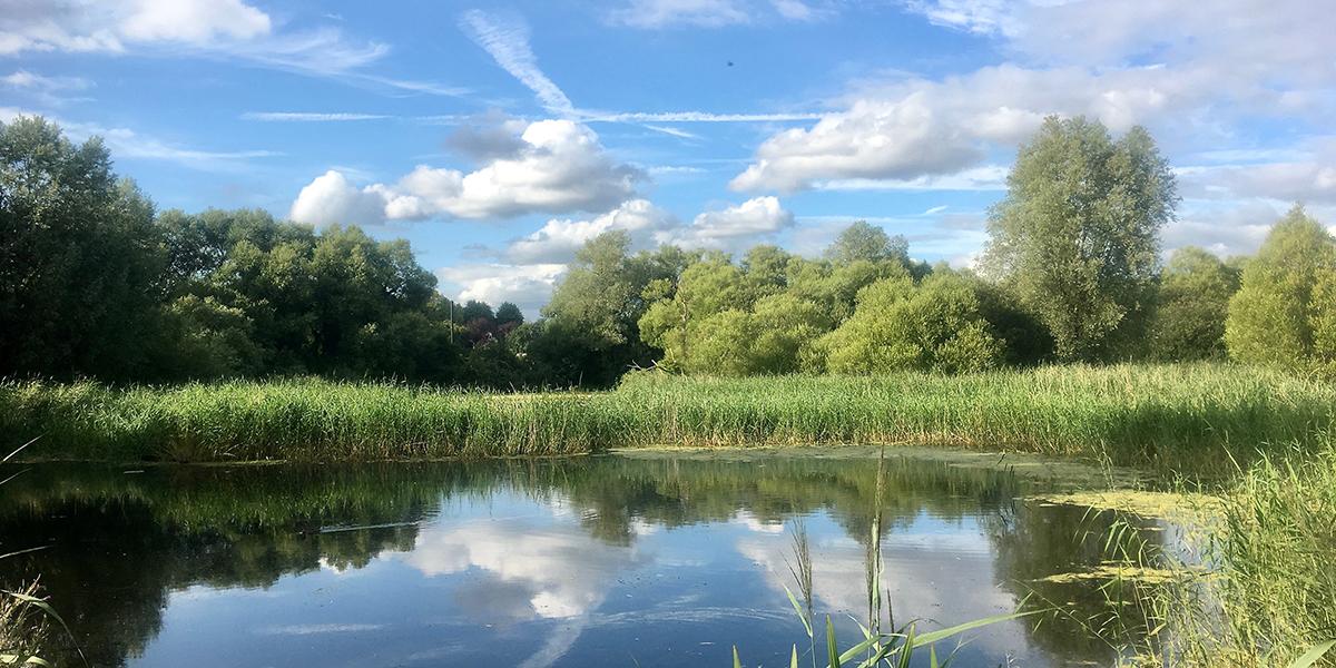 Pond, Magor Marsh