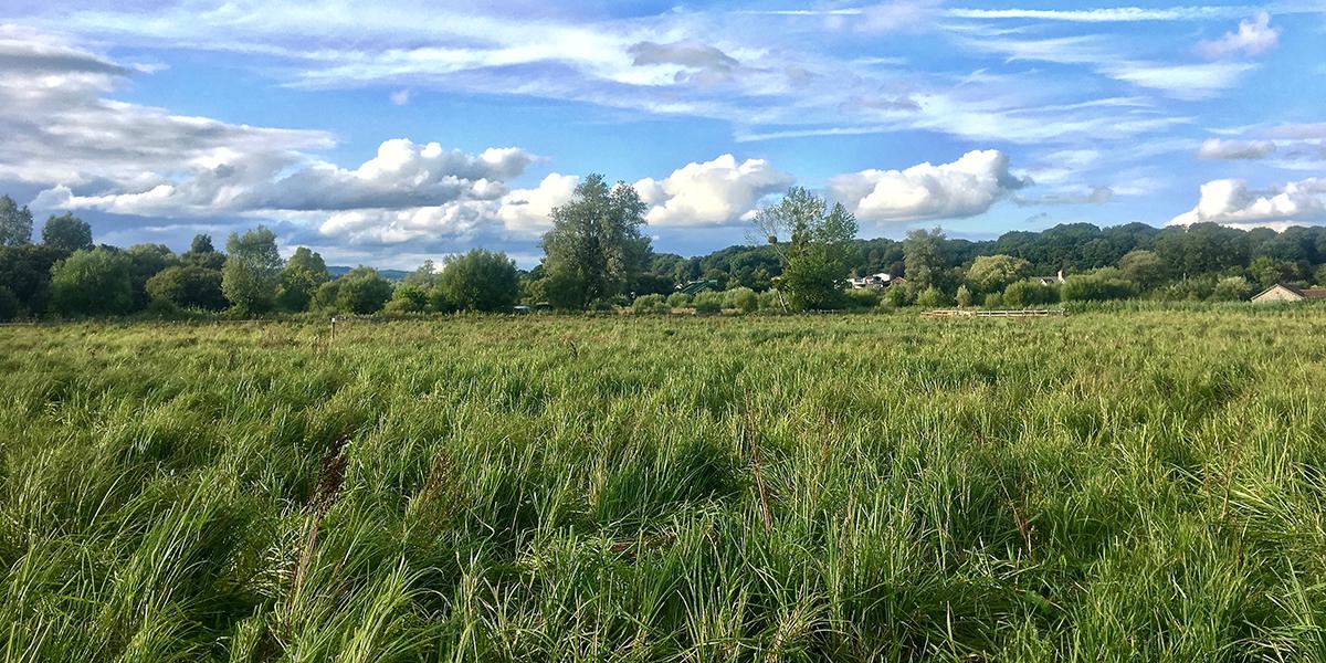 Wet meadow, Magor Marsh