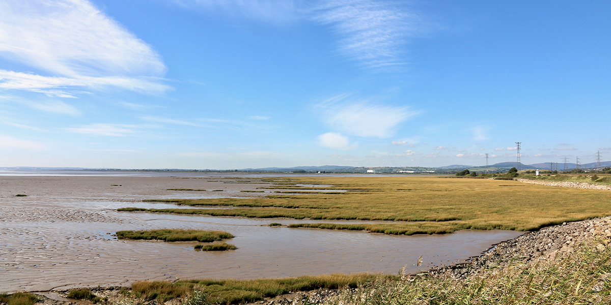 newport wetlands2.jpg