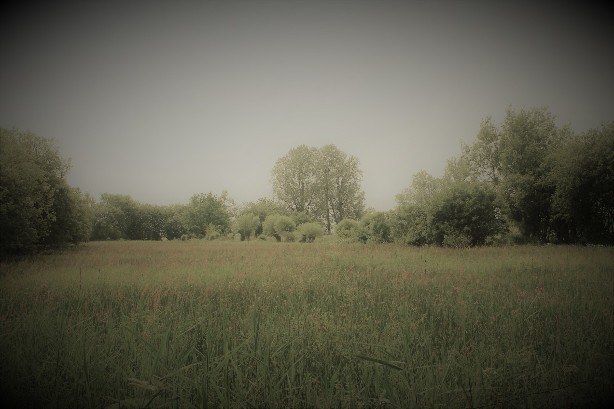 Magor Marsh June'16 5.jpg