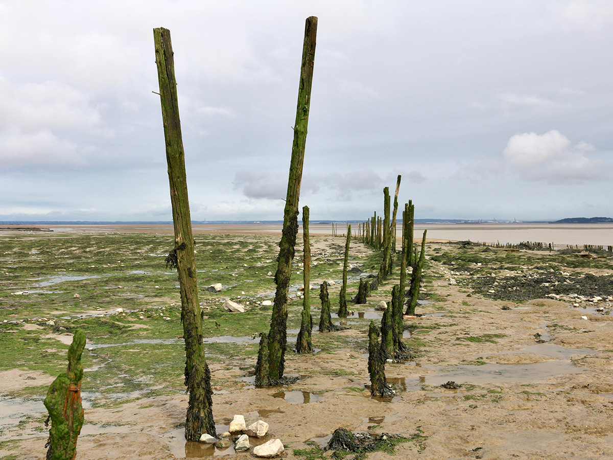Remains of putcher rank at Goldcliff, visible at low tide.