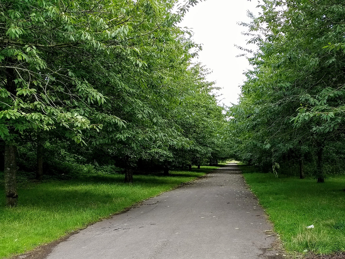 Avenue of trees possibly marking the line of one of the runways