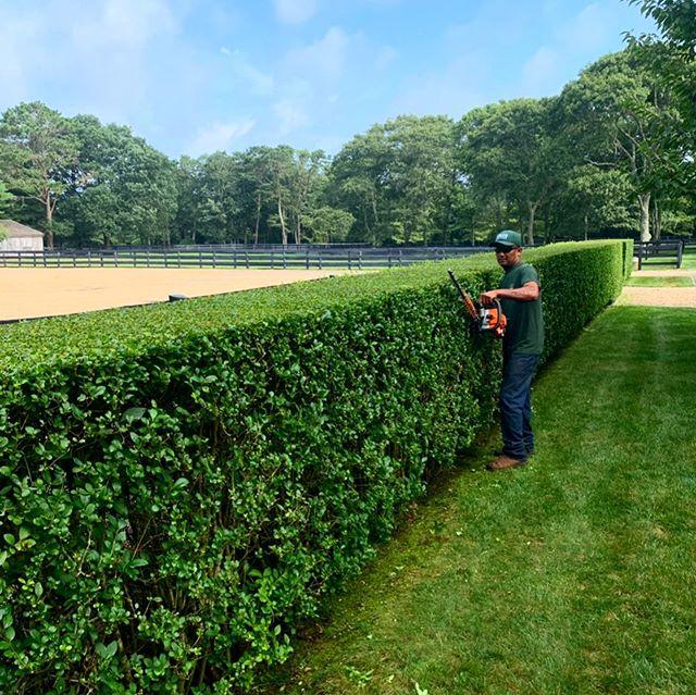 #hedgetrimming #lawnmowing #landscapemaintenance #lawnmaintenance #marthasvineyard @walkermowers @stihl #edgartown #chilmark