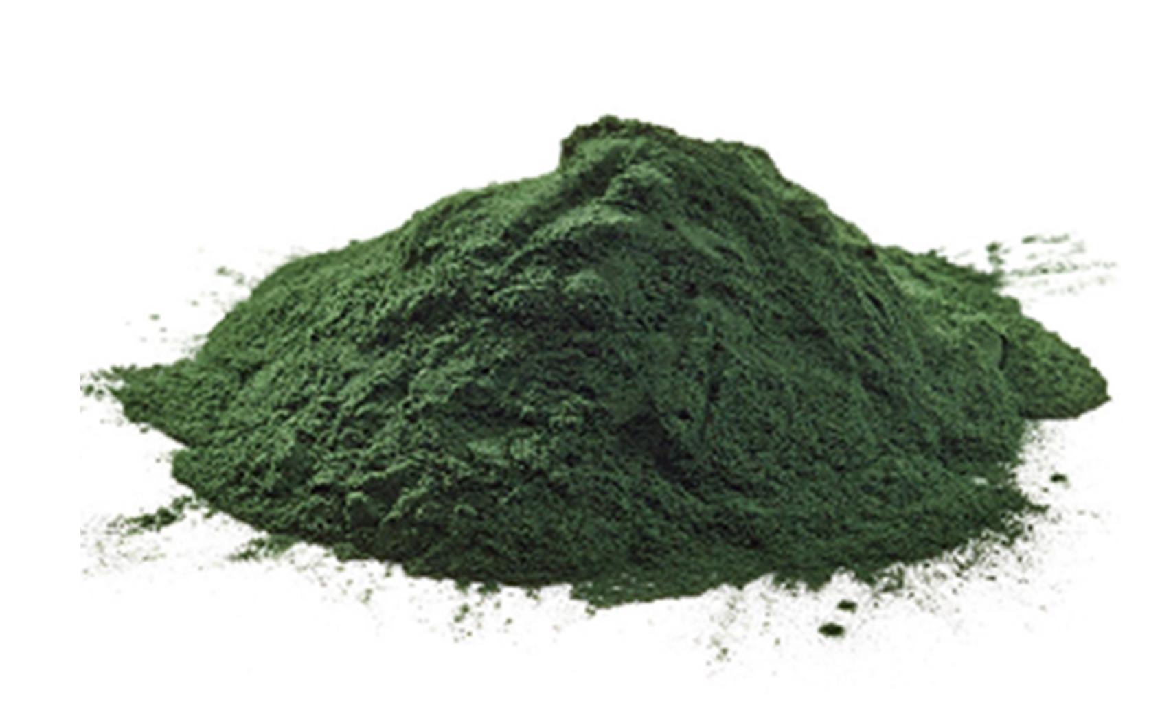 algae1 (1).JPG