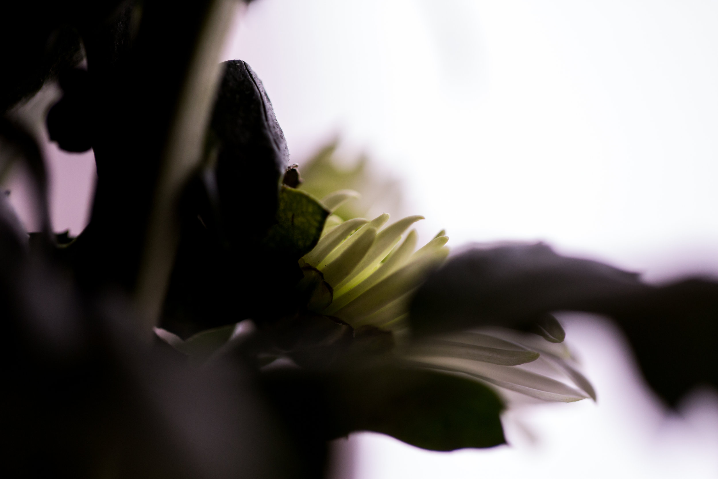 AZphotographyBuffaloWNY4.jpg