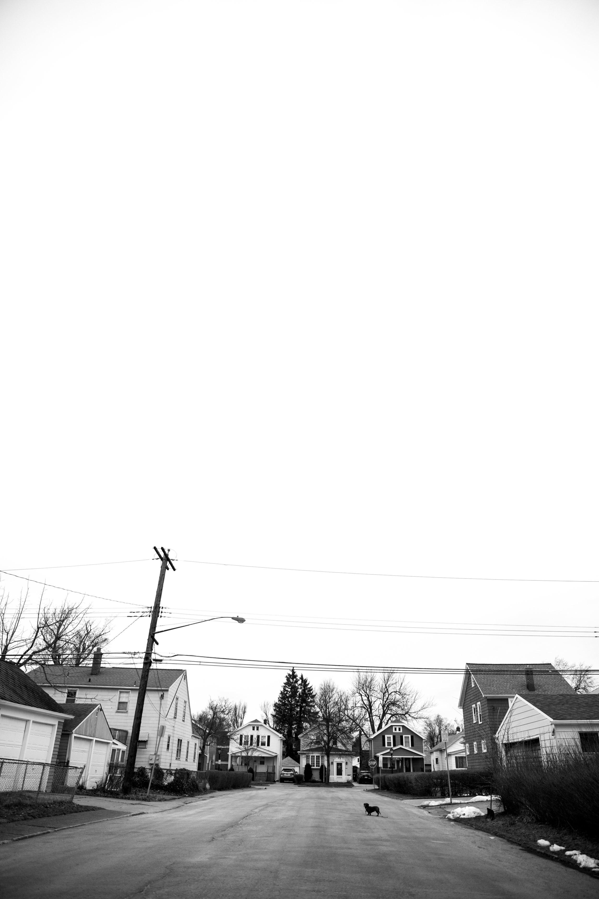 dog, walk, morning, photography, wny, buffalo,