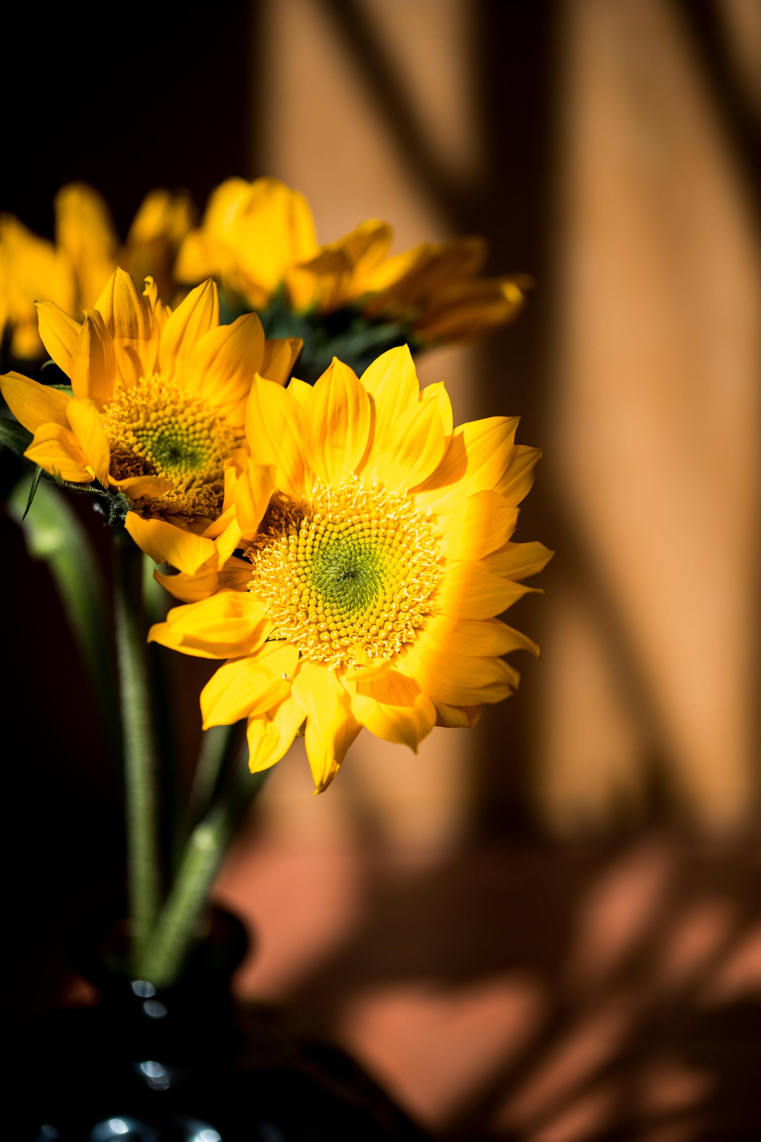 AKZPhotography40019.jpg