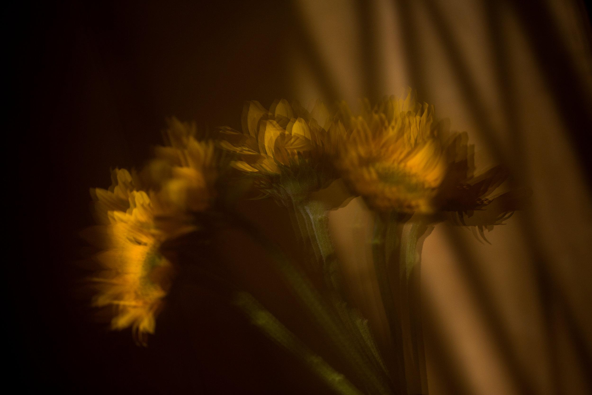 AKZPhotography40119.jpg