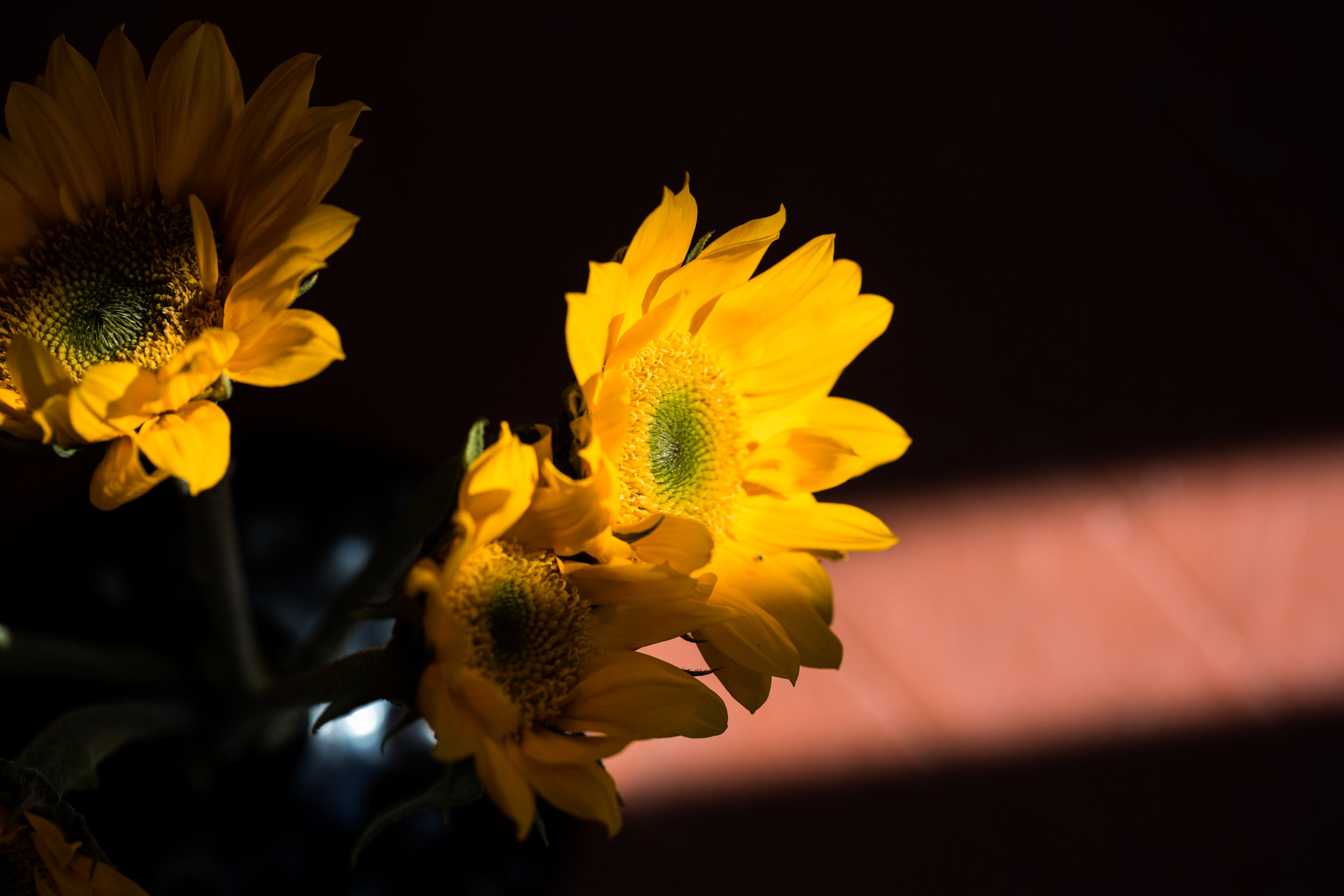 AKZPhotography41119.jpg