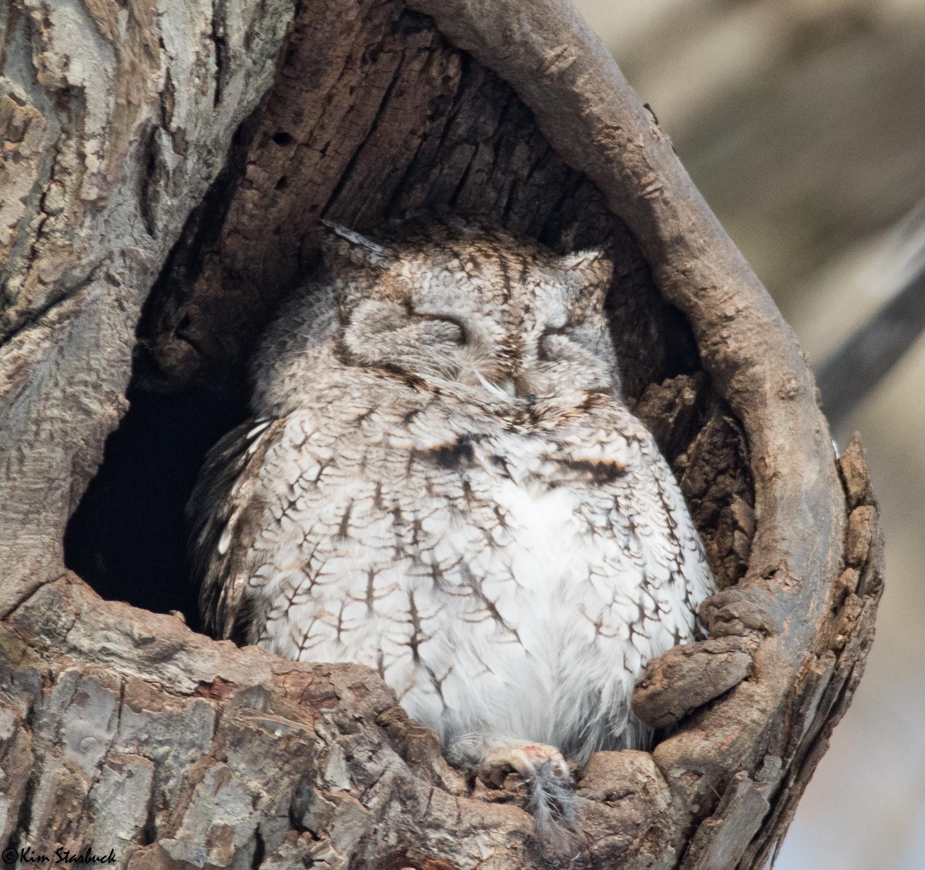 Fresh Pond Owl