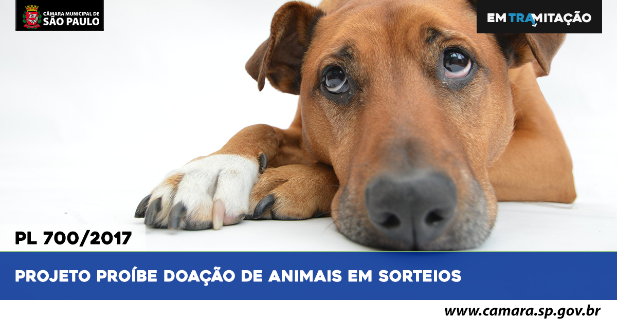 EM-TRAMITA-ABRE-DOAÇAOANIMAIS.png