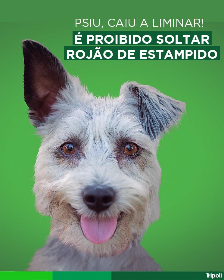 cachorro_frase_final.jpg