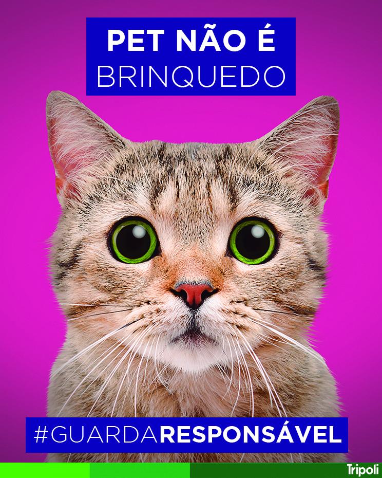 PET_BRINQUEDO.jpg