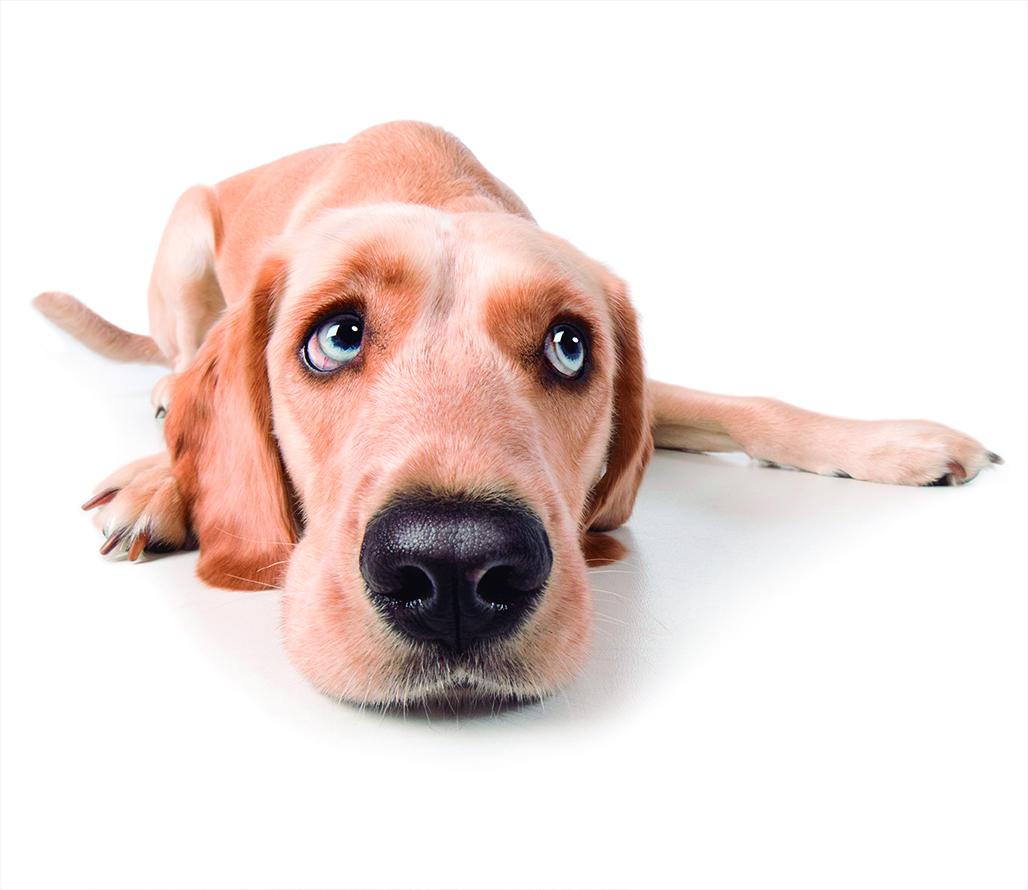cachorro_olhando.jpg