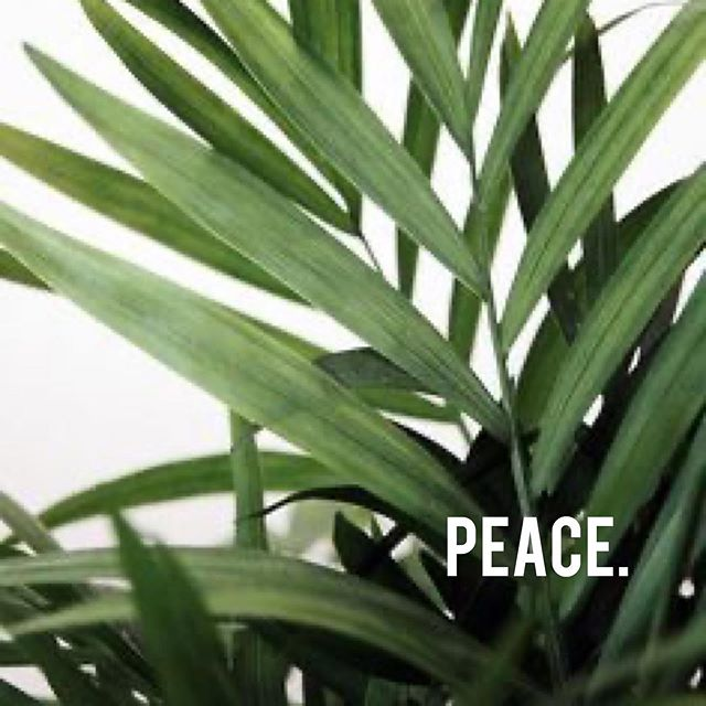 Peace: freedom from disturbance; tranquility 🙏🏽 Protect your peace at all cost. Never allow ANYONE to take it from you.