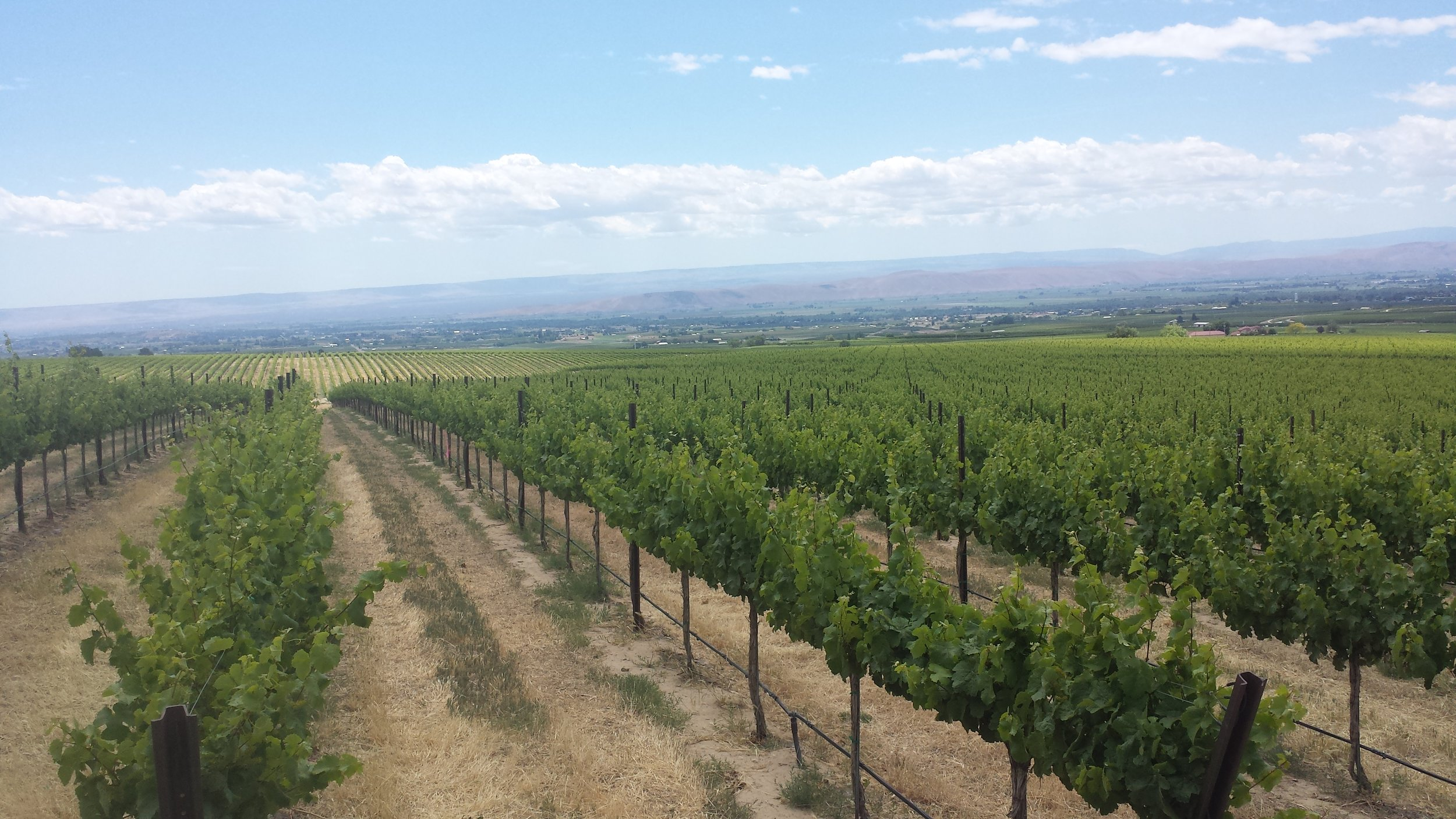 The Zillah Ranch Vineyard in the Columbia Valley, Washington.