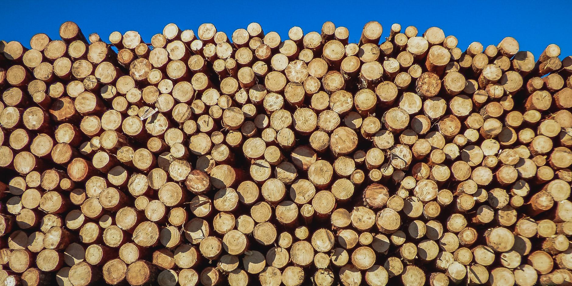 logs01.jpg