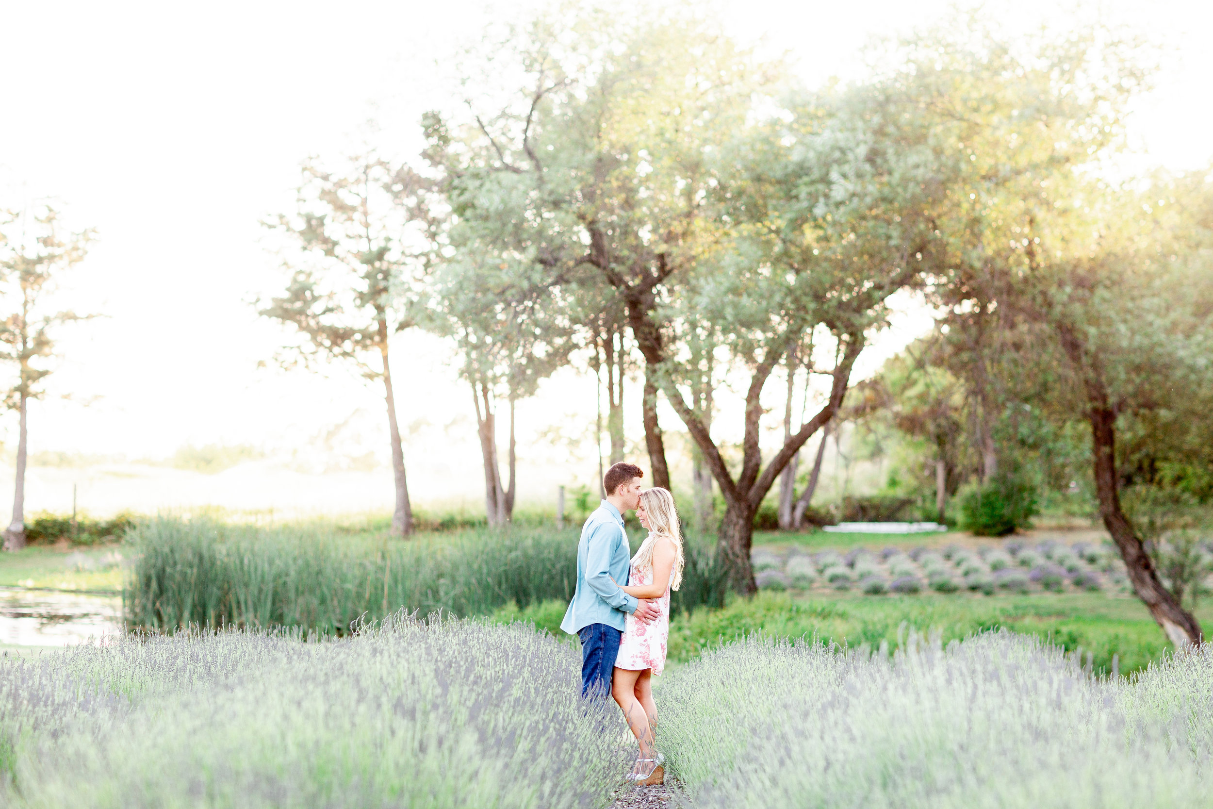 lavender-farm-sunset-engagement-pictures