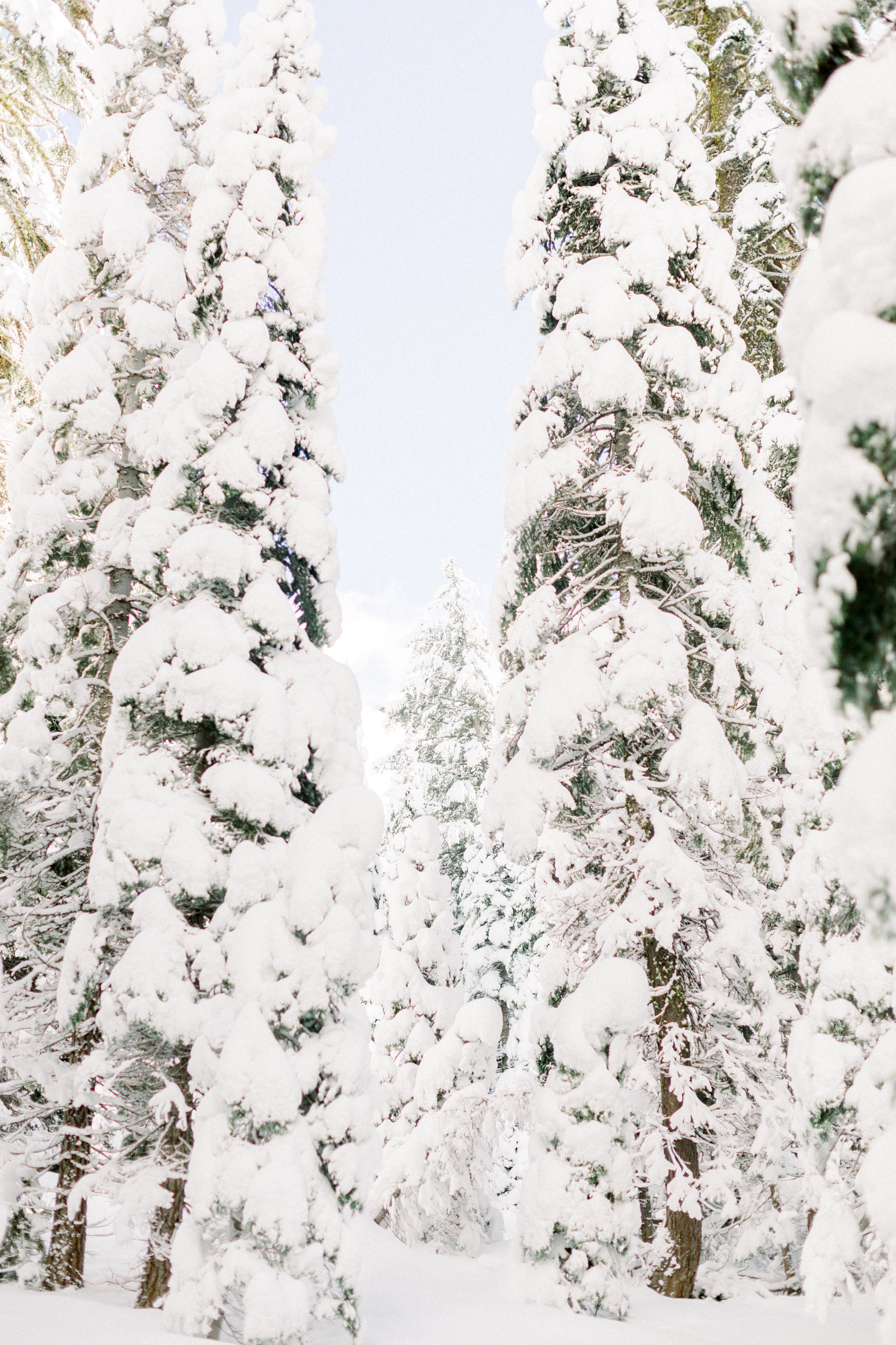 129Butte-Meadows-Christmas-Tree-Adventure (45 of).jpg