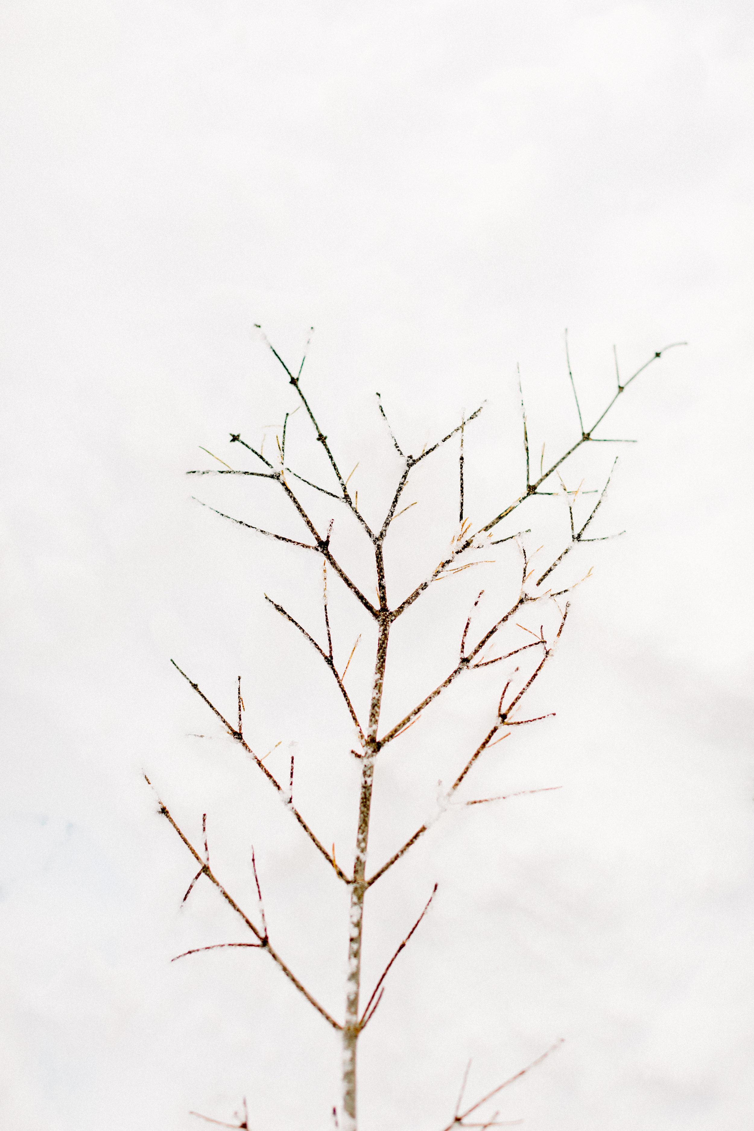 129Butte-Meadows-Christmas-Tree-Adventure (37 of).jpg