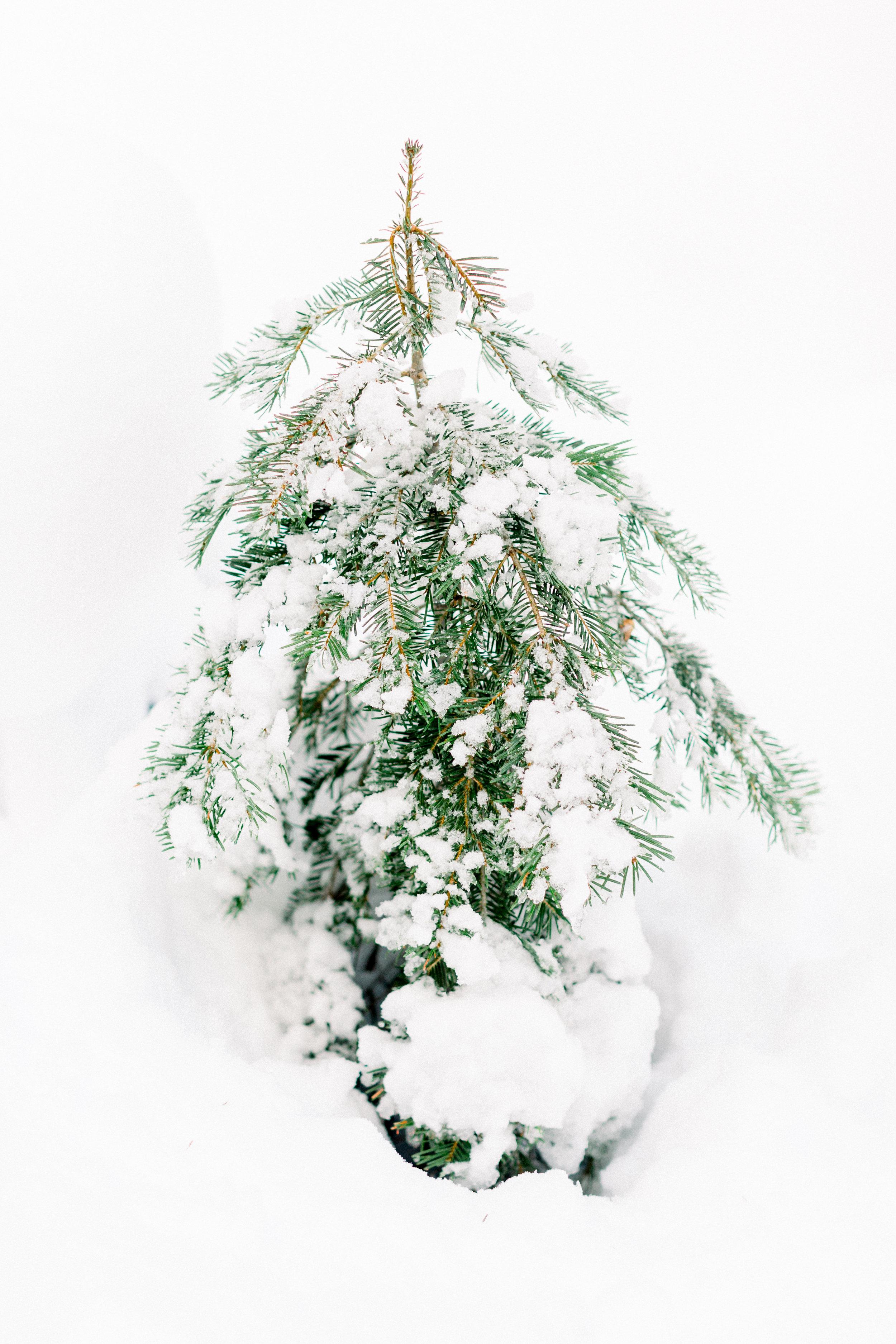 129Butte-Meadows-Christmas-Tree-Adventure (98 of).jpg