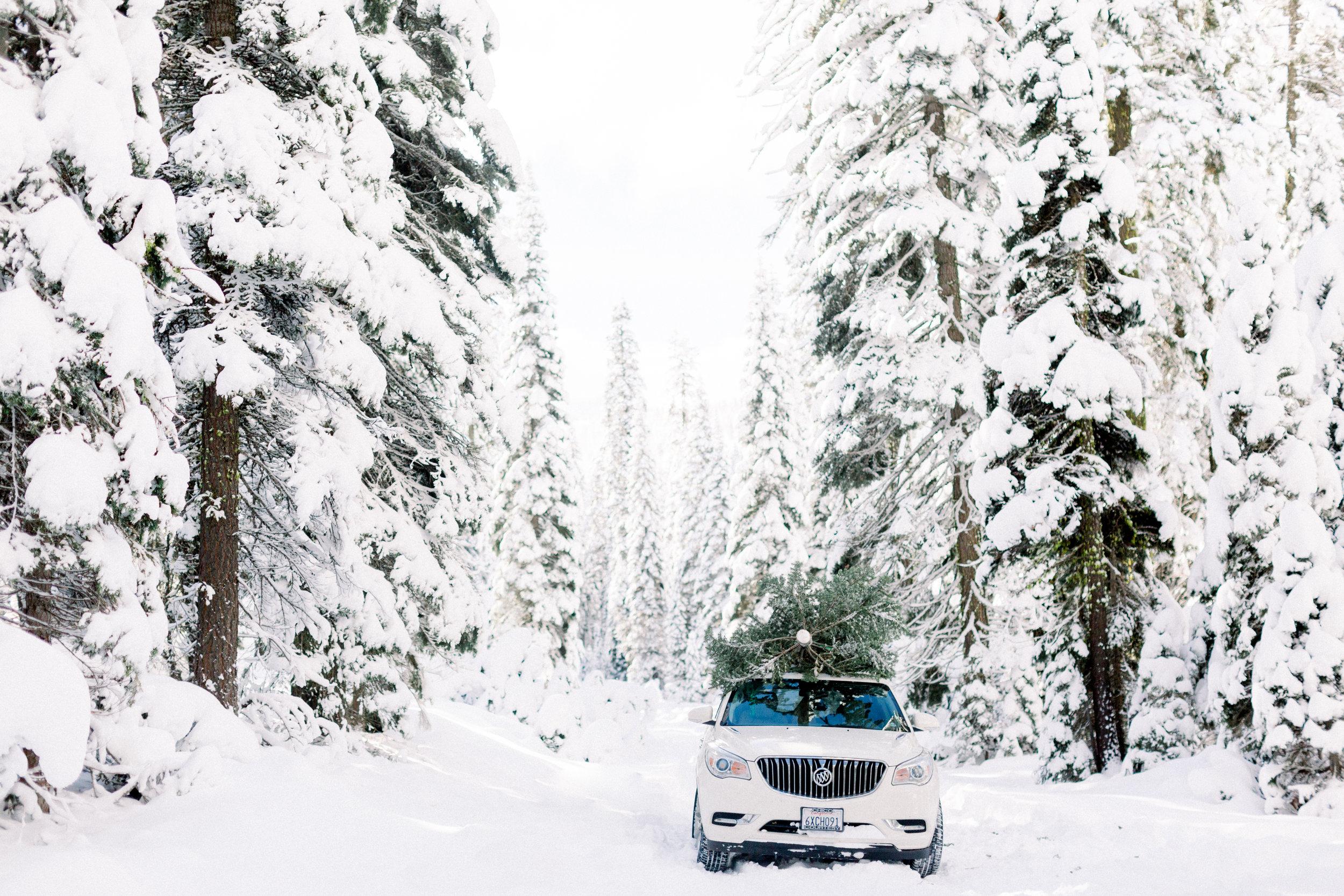 129Butte-Meadows-Christmas-Tree-Adventure (105 of).jpg